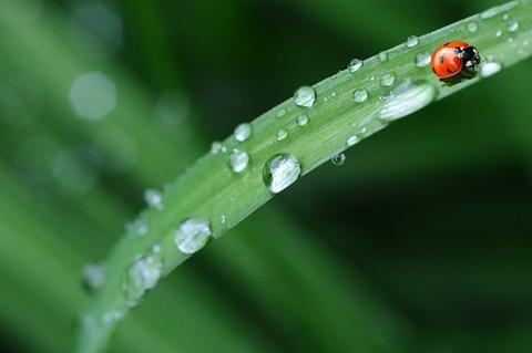 ladybug-574971__340
