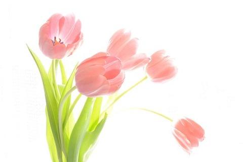 bouquet-69451__340