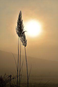 grass-1694293__340