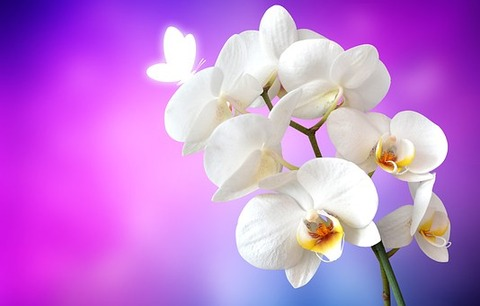 orchid-1259019__340