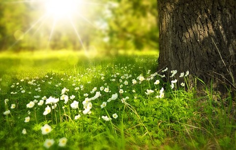 spring-276014__340