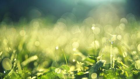 meadow-3743023__340