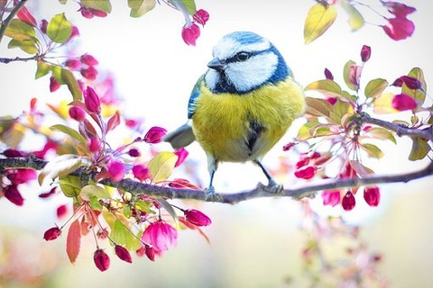 spring-bird-2295434__340