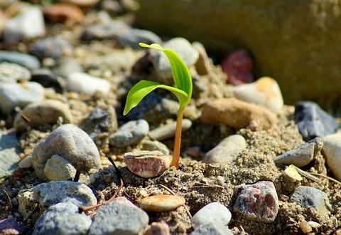 plant-4108210__340
