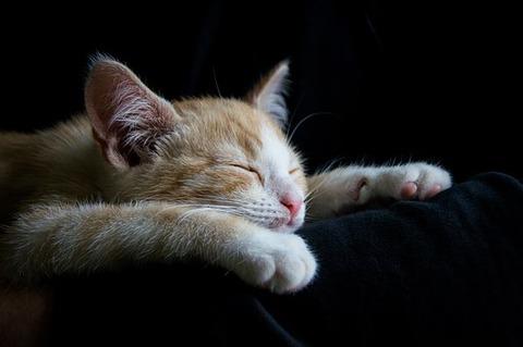 cat-1056661__340