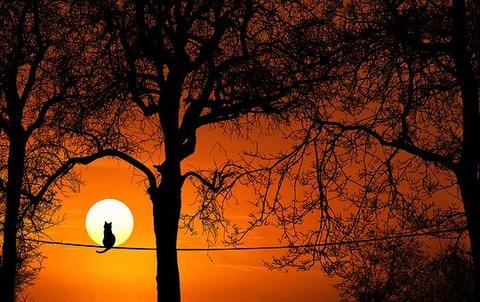 tree-3063715__340
