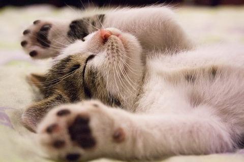 kitten-2288404__340