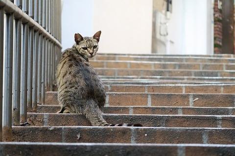 cat-3409005__340