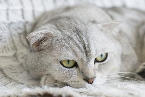 cat-2310384__340