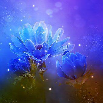 anemone-3288510__340