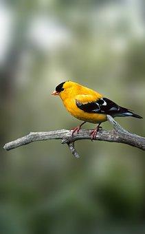 bird-3725766__340