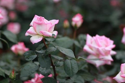 flowers-3352022__340