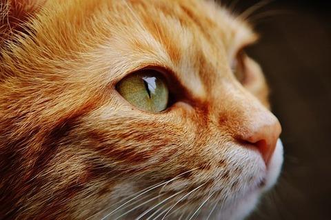 cat-1455468__340