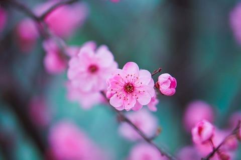 flower-4061045_640
