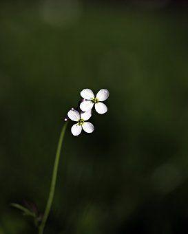 wild-flower-2226095__340