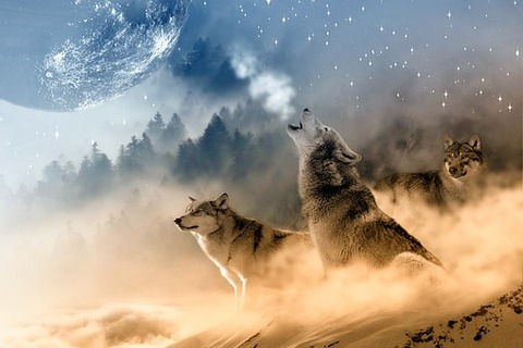 wolves-1400819__340