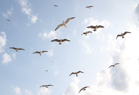 seagulls-3991744__340