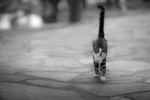kitten-4580287_640