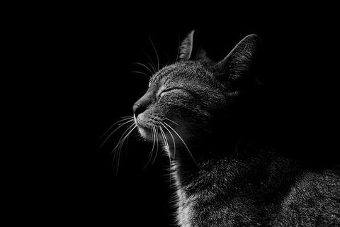 cat-4184276_640