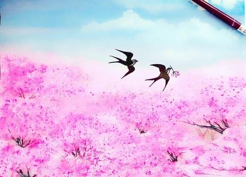 cherry-flowers-3642188_640