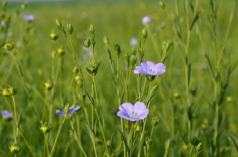 flowers-4175164__340