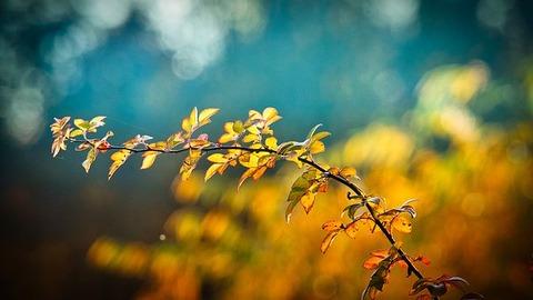 autumn-3846345__340