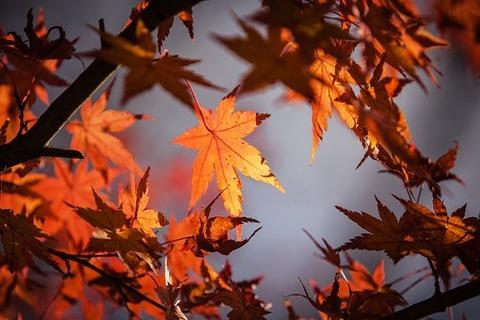 autumn-leaves-1415541__340