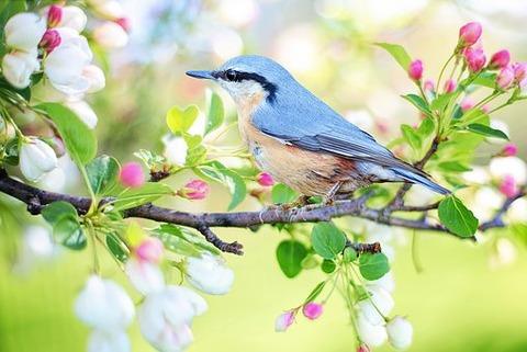spring-bird-2295431__340