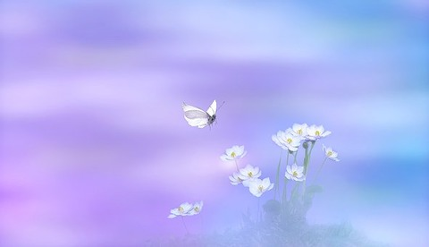 flowers-3540236__340