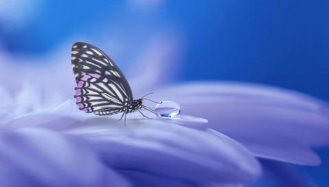 butterfly-3054736__340