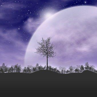 trees-490647__340